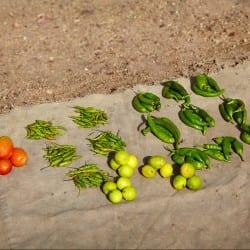 Produce, Harrar